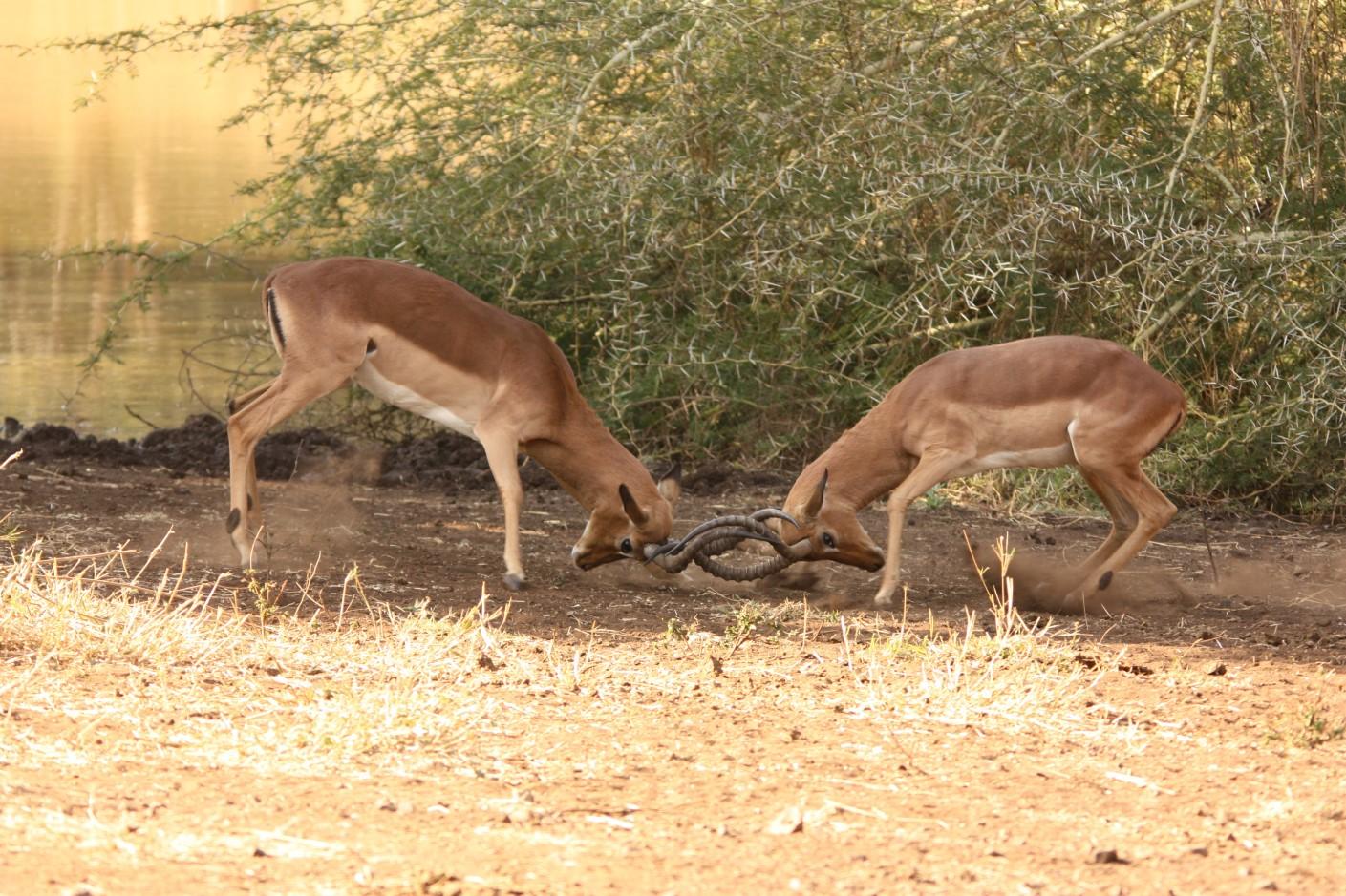 Antelope 16-08-14 (1409 x 939)