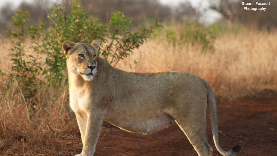 Unforgettable Safaris October (960 x 540)